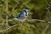2020-03-15-Algonquin Birds