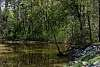 Bankside Azaleas