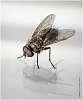 Just a tiny fly