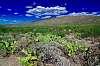 Saguaro National Park, Eastern Tier, Tucson, AZ.