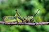 Pentax Photo Contest #2 - Nature