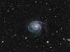 Pinwheel Galaxy (M101) from my light-polluted backyard