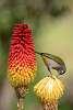 Like a bird ! (Reunion Island)