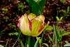 2020-05-27-Around the garden