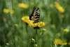 Butterfly w/ Vivitar 2x Macro Zoom