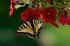 Flowers and pollinators