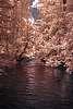 Infrared Adams River