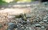 Happy Mountain Slug