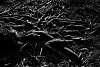 Serpentine Roots