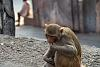 India, part two: Jaipur, Amer and a whole lot of monkeys