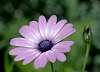 Is it Purple