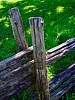 Cedar poles used to build field fencing, CANADA. 645Z + FA 33-55 mm f/4.5 AL.