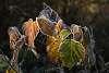 Frozen Leaves Assortment