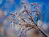 Freezing rain on my Maple tree branches. 645Z + FA 150-300 mm f/5.6 zoom