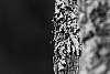 Lichen Macros