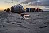 sperm whale beached itself and died; this is what happened (2)