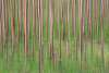 TNA -Tree Nursery Abstract