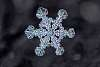 P-2021-Snowflake-001