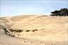 The dunes near Schoorl, NL