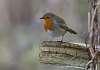 Photograher's favourite bird
