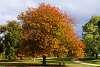 Autumn colour, Mornington peninsula