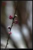 Some flowers by TOKINA AT-X 90MM F2.5 Macro