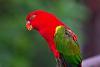 A* 300 f2.8  Birds.