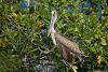 Yucatan Fauna
