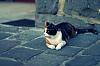 A cat in an alley