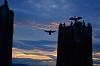 Cormorant landing pad