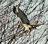 Recent birdie images