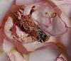 A Bee Dies