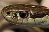 Another Garter Snake