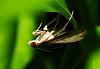 An Upside Down Moth