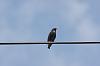 4 more birdies with K-x + 55-300 + Kenko 1.5x TC