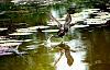 Nature-Mekong Delta Birds