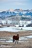 Winter Mountains+Horse