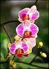 A pink flower..