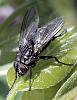 a fly for rense......