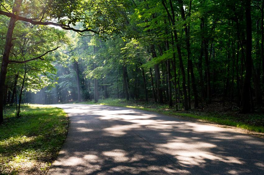 Hill Ewell Drive sun and shadows, Wilderness battlefield