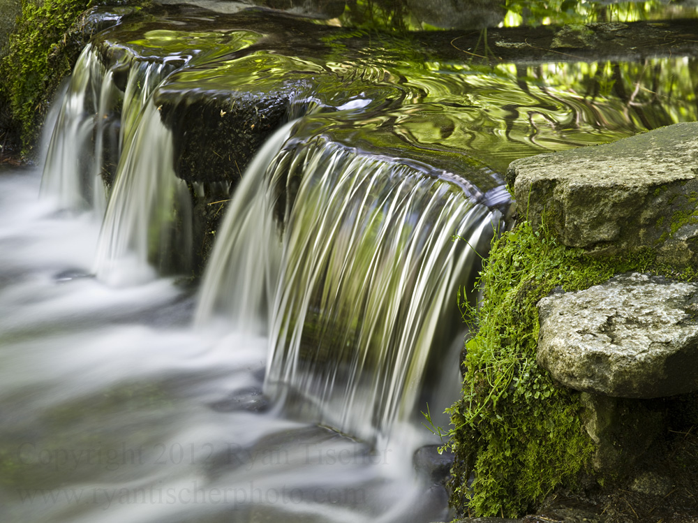 """Fern Springs"" 