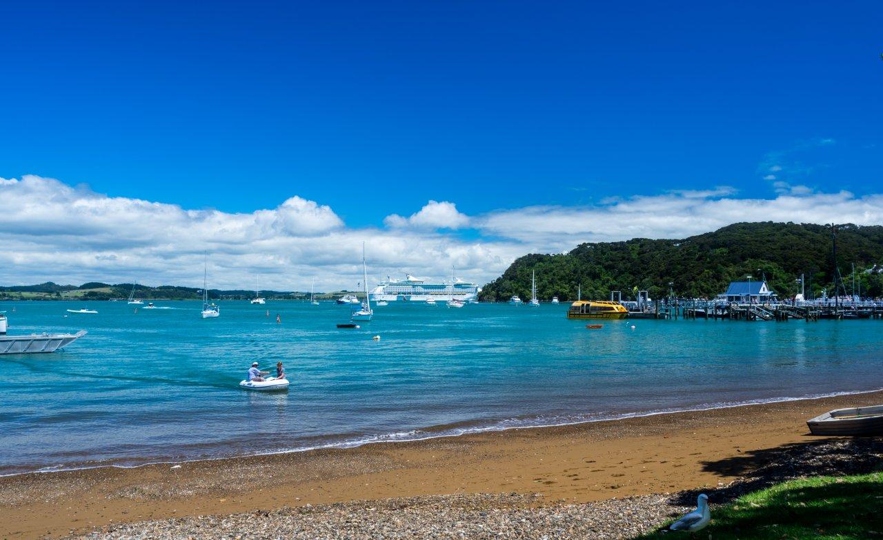 Wild New Zealand Kiwi On Beach