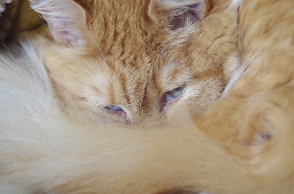 Bushy Tail hides Sleepy eyes