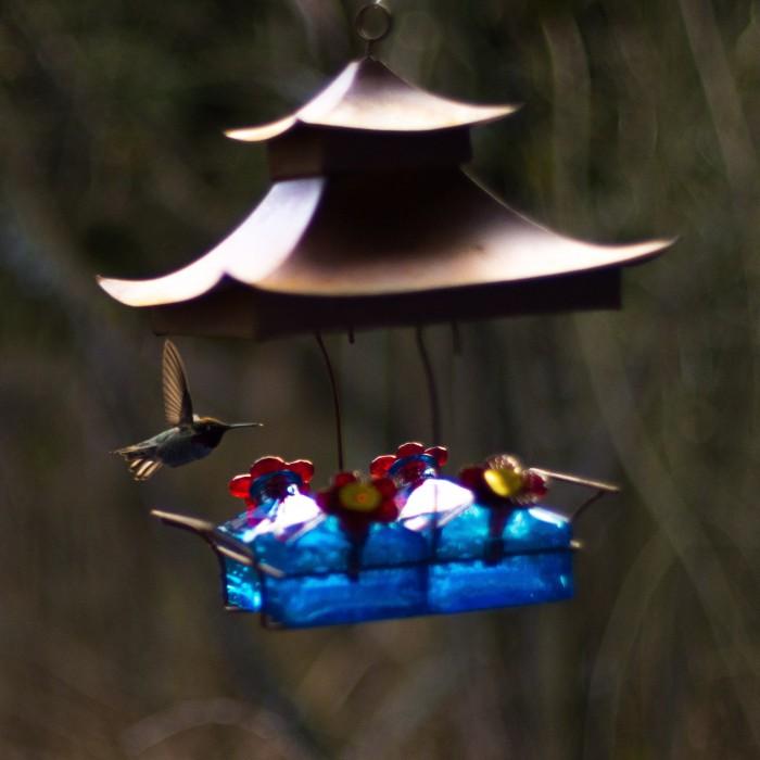 Hummingbird with LR edit