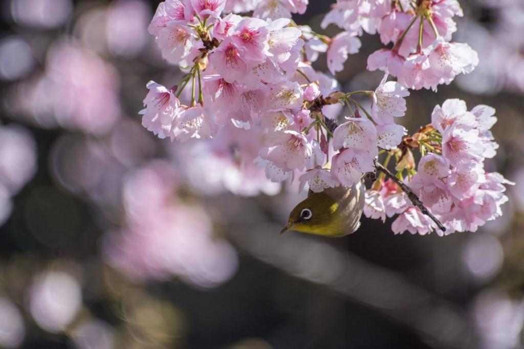 Bird in Ueno Park