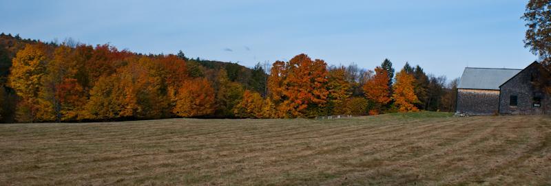 Late Fall Foliage