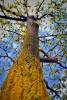 Spring's Tree