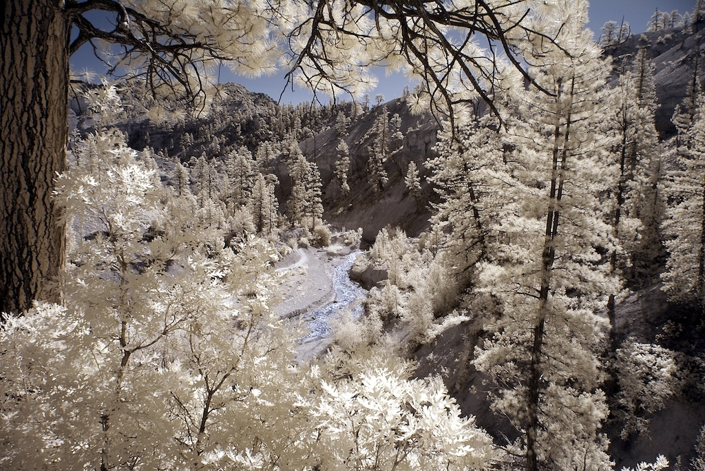 Mossy Cave Trail in Infrared