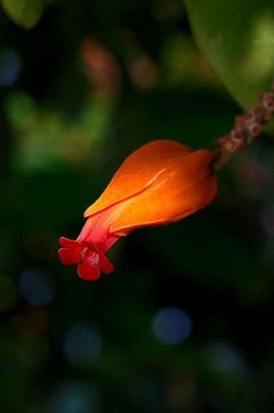 Tree Bloom in Orange