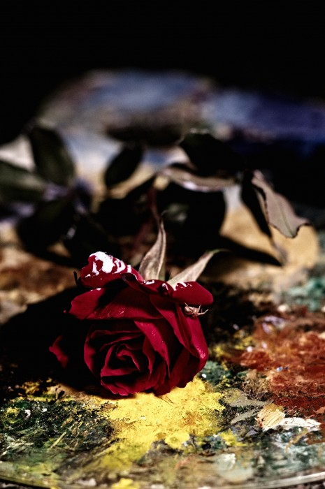 Red Rose and Pallette